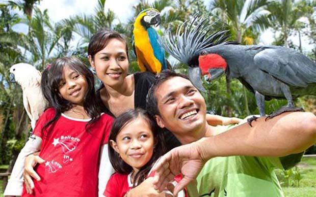 Bali Bird Park And Reptile Park Bali Activities Tour Bali Tour
